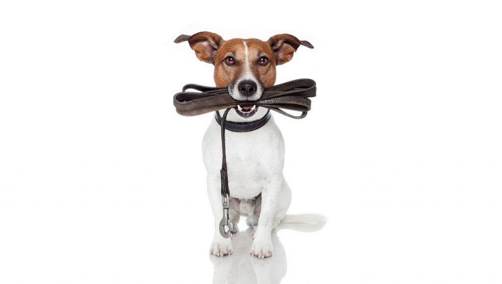 چگونه بند های چرمی سگ را تمیز کنیم؟